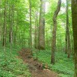 Joyce Kilmer Forest