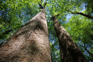 joyce_kilmer_forest