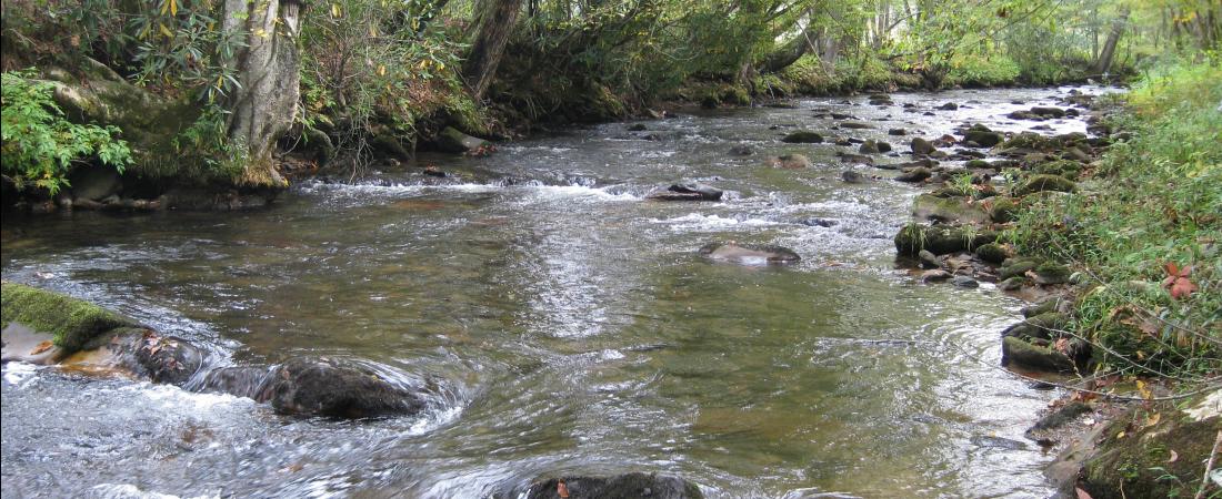 1100x450 Tusquittee Creek